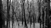 Black and White Trees Loop