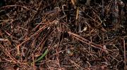 Rain On Soil Loop