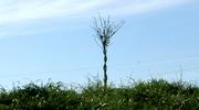 Dead Tree/Living Tree Loop