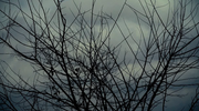 Lent Tree Loop