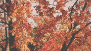 Vintage Autumn Loop