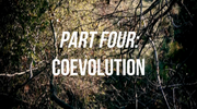 The Coevolution of Biology and Culture